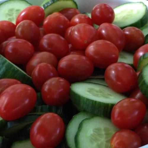 Tomaten_Gurken_voll